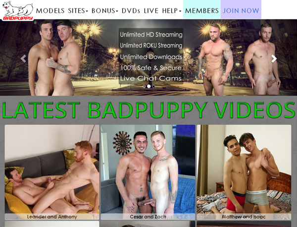 Badpuppy.com Hacked Accounts